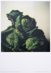 Poster: Twombly, Cy - 2009 - MUMOK Wien (Cabbages)